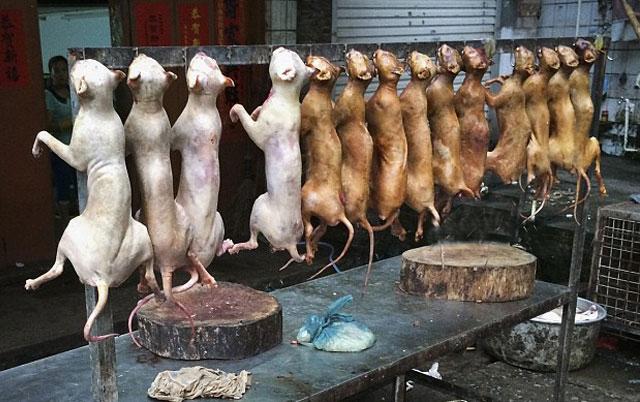 Nuevo Negocio: carne de perros es vendida en Quinta Crespo