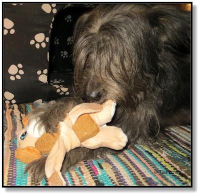 Knabberspaß für Hunde