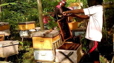 gudang lebah menjual madu di ungaran dengan keasliaan terjamin uang kembali 100%