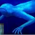 Δεν έχετε ξαναδεί κάτι τέτοιο! Μυστηριώδης οργανισμός στην άβυσσο θαλασσών!