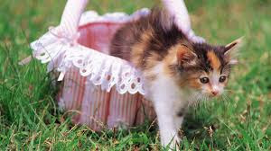New Baby Cats Animal Hd Wallpaper6