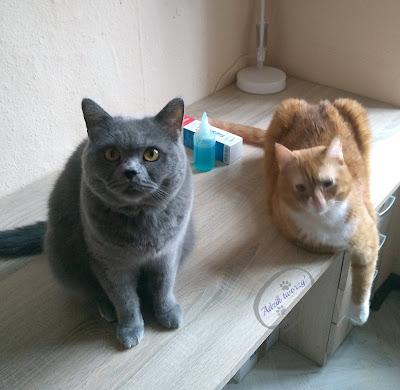 Adzik tworzy - żel Fresh Aid dla kotów test i recenzja ScanVet