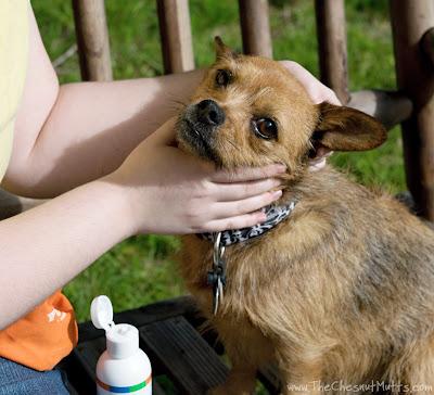 Jada and BVH Pet Care Premium Dog Ear Cleaner