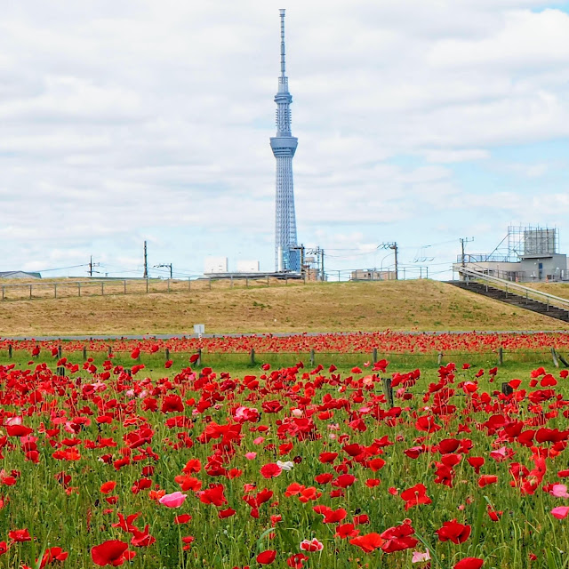 荒川自転車道 平井大橋 ポピー スカイツリー