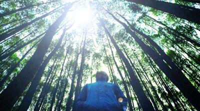 Objek wisata hutan pinus dilereng merbabu
