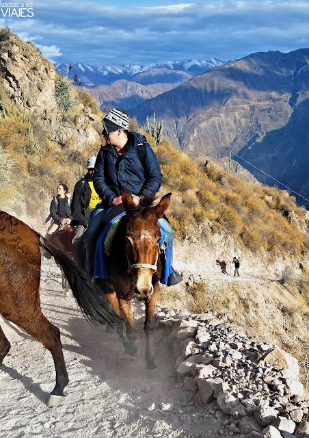 Ascenso del Cañón del Colca en mula