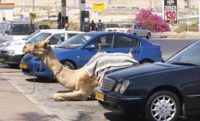 Aturan Berkendara Paling Nyleneh di Berbagai Negara Dunia