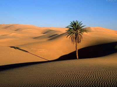 Beautiful Desert Normal Resolution HD Wallpaper 8