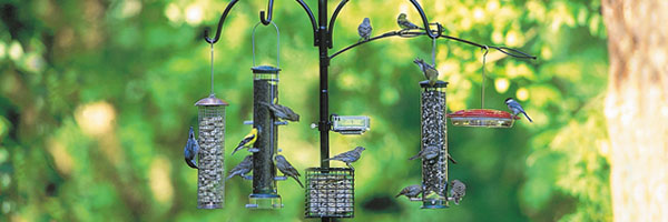 We Have A Few Feeders In Our Backyard. We Were Wondering If We Should Leave  Them Empty In August And Early September To Discourage Birds That Fly South  For ...