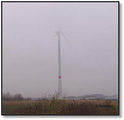 Windrad im Nebel