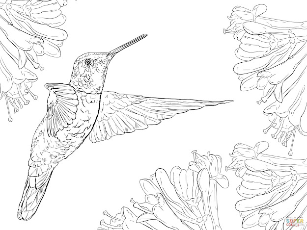 Realistic Bird Coloring Pages  Magnificent Hummingbird Coloring Page  Free Printable Coloring Pages
