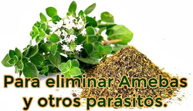 El orégano ayuda a eliminar amebas y otros parásitos del cuerpo