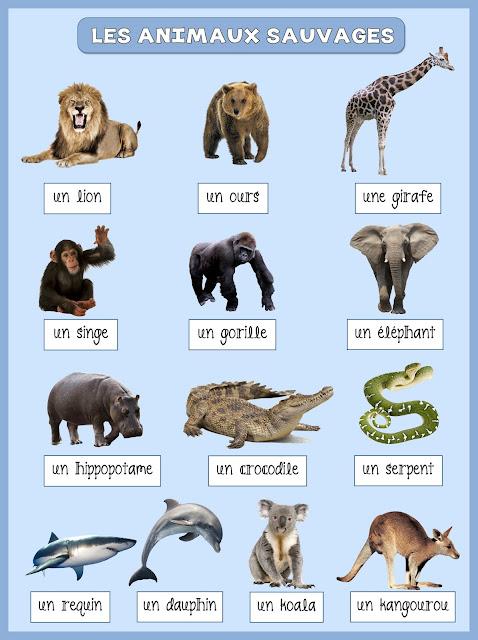 Zwierzęta - dzikie zwierzęta 1 - Francuski przy kawie