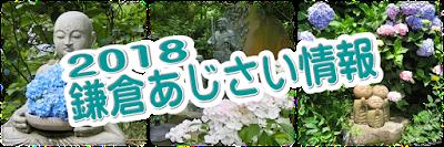 2018鎌倉アジサイ情報