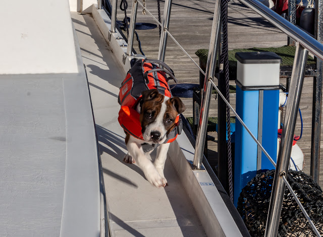 Photo of Ruby running around Ravensdale in her new lifejacket