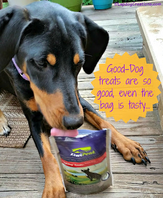 #ZiwiPeak Good-Dog #Venison treats are SO good, Penny thinks even the bag is tasty! #DobermanPuppy #RescueDog #ChewyInfluencer ©LapdogCreations