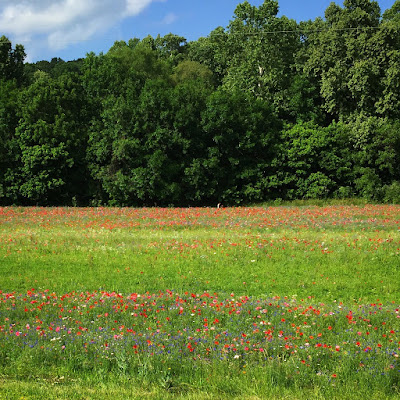 Bella Vista wildflowers