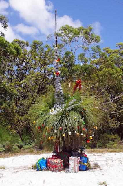 Native Christmas Tree on Stradbroke Island