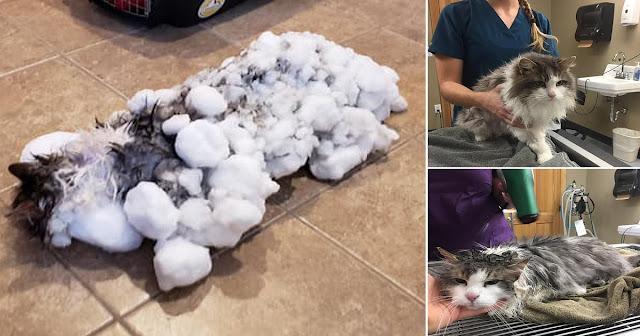 Γάτα βρέθηκε παγωμένη κάτω από ένα βουνό από χιόνι αλλά επέζησε και της μένουν ακόμη 6 ζωές
