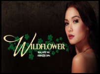 Wildflower - 19 October 2017