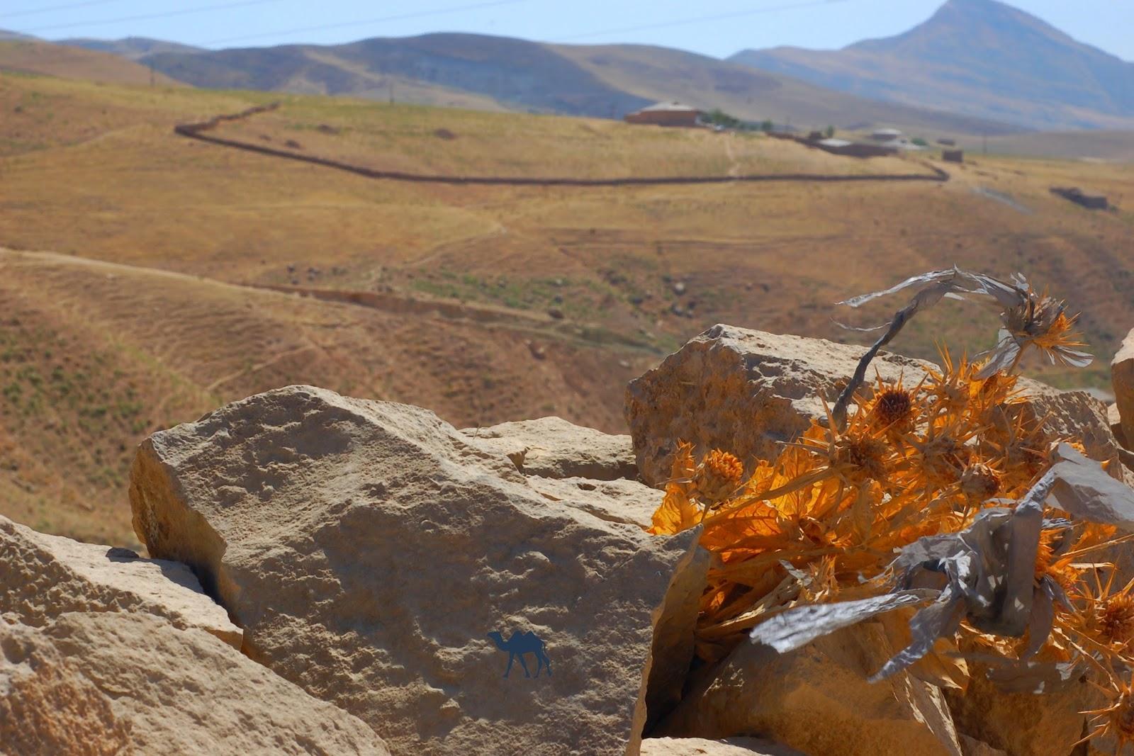 Le Chameau Bleu - Vue depuis une des montagnes de Boysun - OUzbékistan