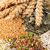 Safra de grãos volta a nível histórico com produção de 232 milhões de t