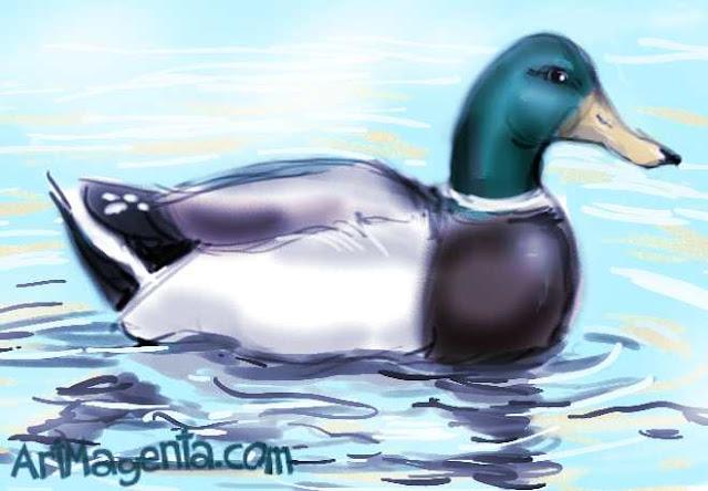 Mallard sketch painting. Bird art drawing by illustrator Artmagenta