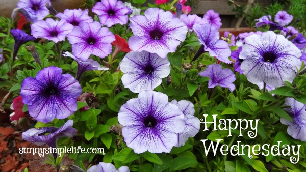 purple petunias, happy Wednesday