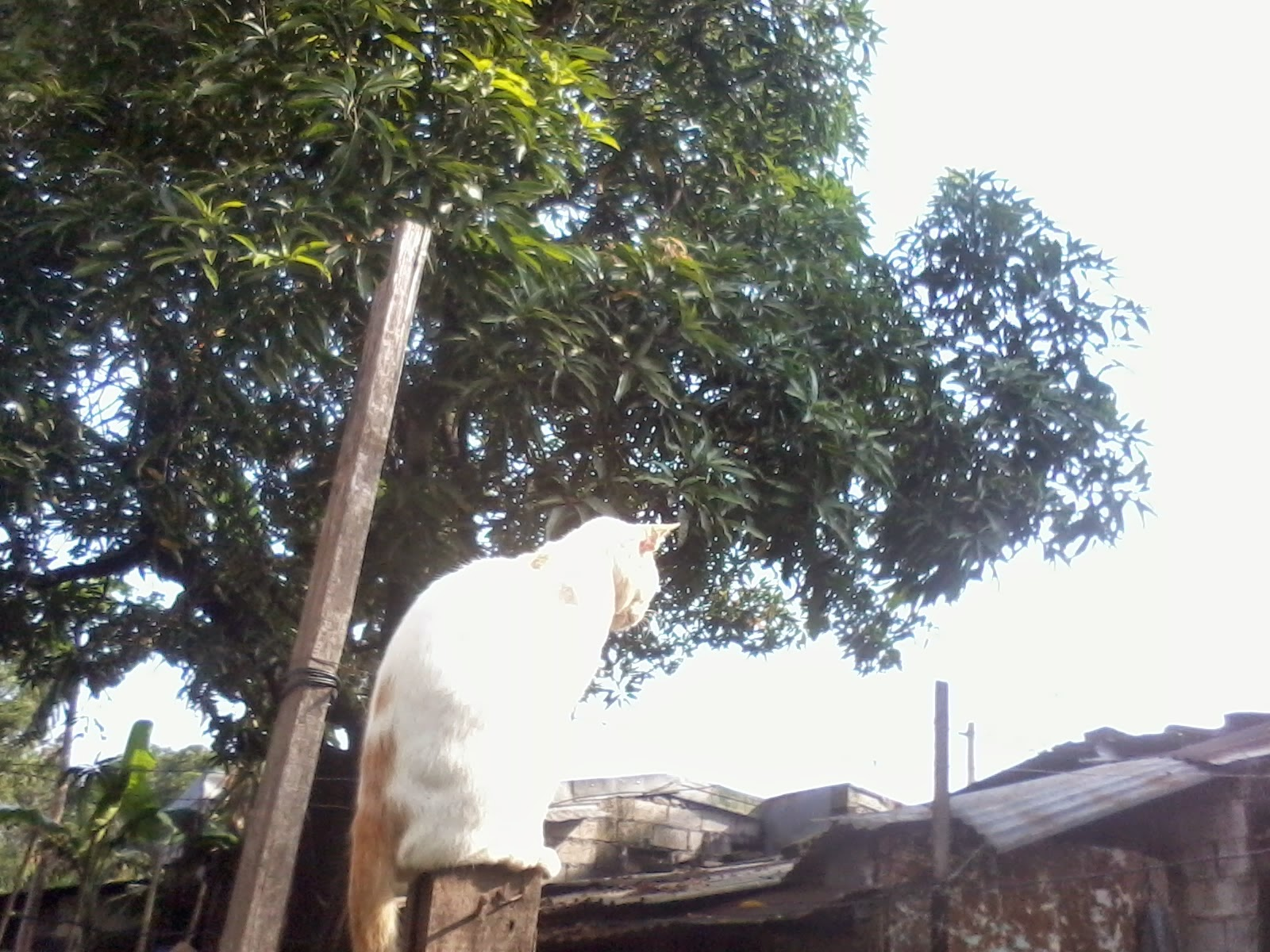 snapshot of white cat