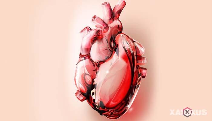Fakta 1 - Jantung ibu hamil 18 minggu bekerja lebih keras