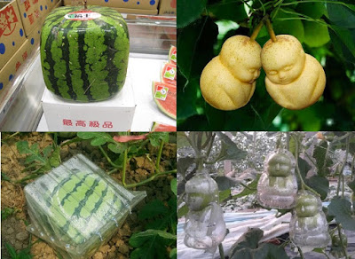 Fruit moulding , square shaped water melon
