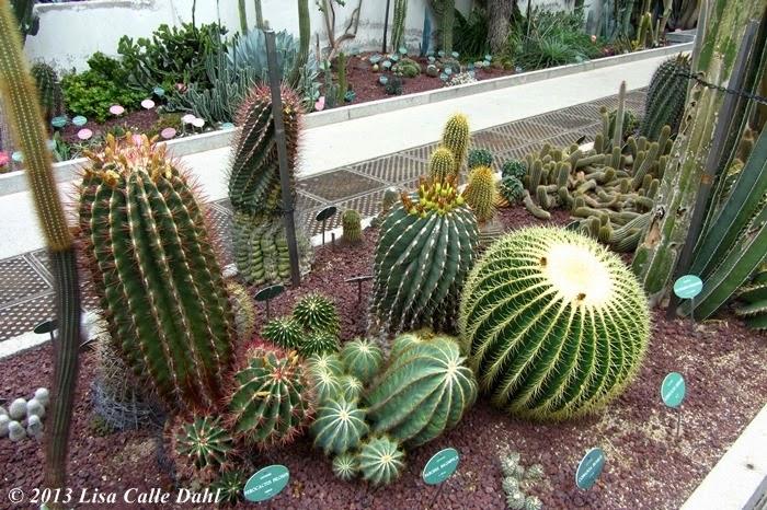 Descubriendo hojas invernadero des rtico y subtropical real jard n bot nico de madrid - Jardin de cactus madrid ...