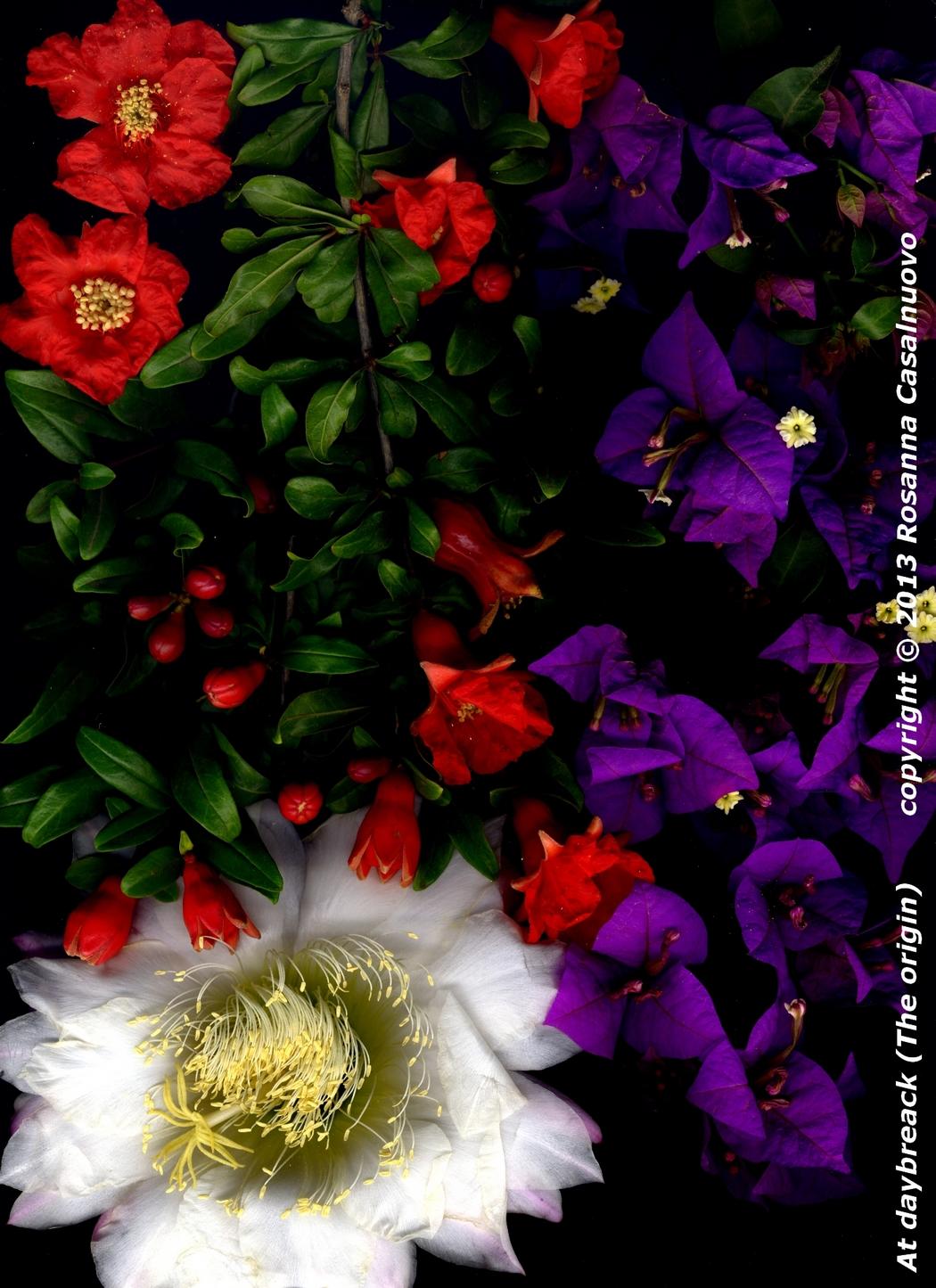 scannografia fiori bougainvillea melograno cactus colori originali