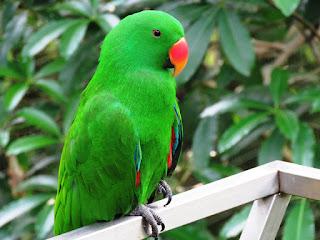facts about parrots