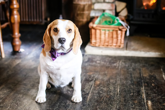 Discover dog friendly North East England with Holly Bobbins' guide to dog friendly businesses, restaurants, pubs, cafes, shops and places to stay in the North East of England.