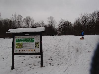 zima w Krakowie, zabawy na śniegu, uroczysko Górka Pychowicka, grzyby pod śniegiem