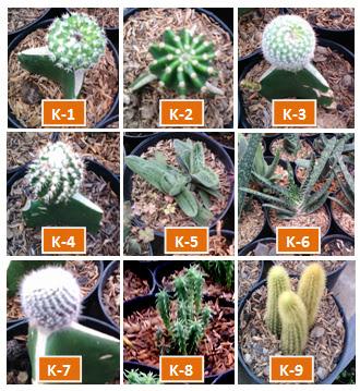 katalog kaktus