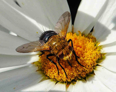 Honey Bee, Living From Glory To Glory Blog...