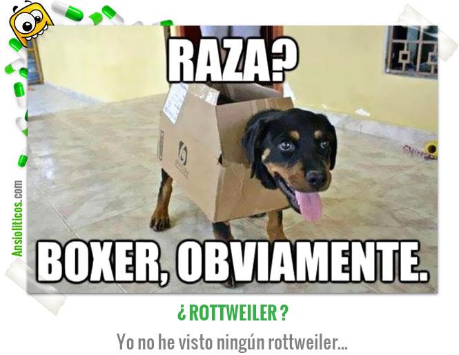 Chiste de Animales Perro Boxer