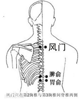 背部穴道圖風門 - 背部穴道膀胱經風門 | Source:baike.baidu.com/item/风门穴