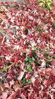 Automne, feuilles colorées