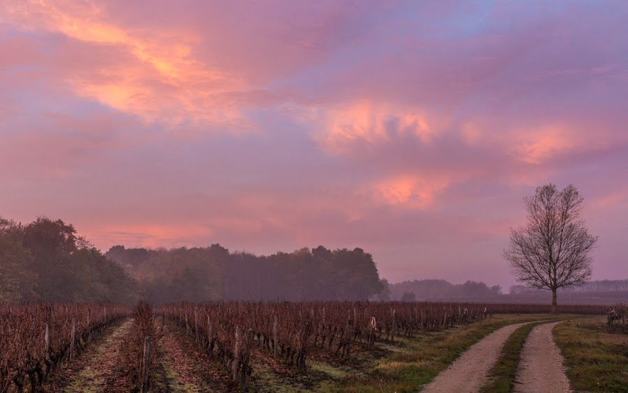 Sunrise and Beaujolais
