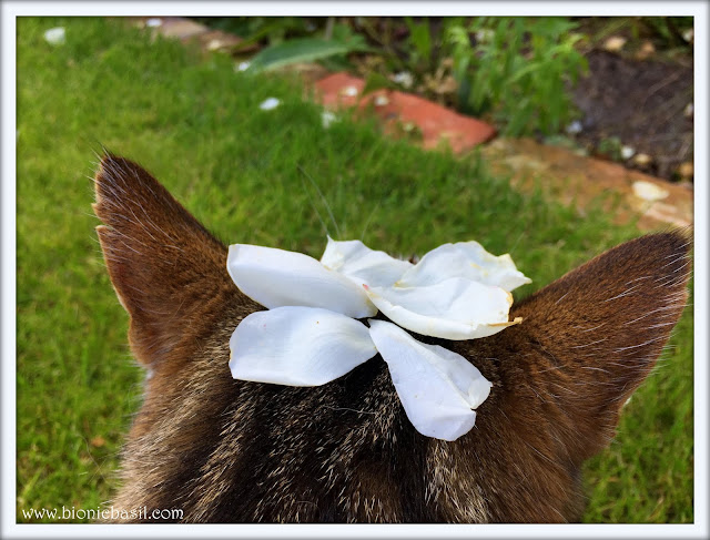 Friday Fluffers withThe B Team @BionicBasil® Wing Commander Basil's Best Blooper Week 2