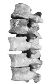 Macam-Macam Struktur dan Bentuk Tulang Kerangka Tubuh Pada Sistem Gerak Manusia Beserta Fungsinya