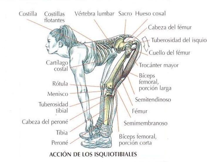Ejecución del peso muerto variante piernas semirrígidas