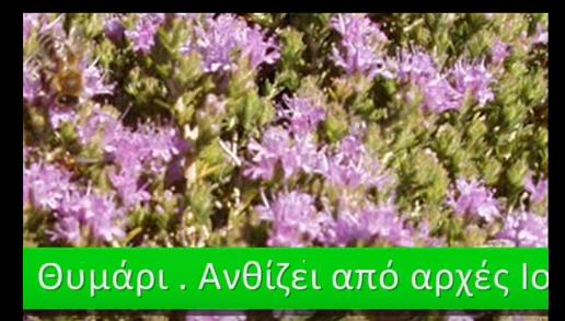 Τα μελισσοκομικά φυτά και οι ανθοφορίες τους VIDEO