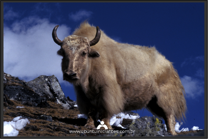 lançamento do ubuntu 16.10 yakkety yak em outubro