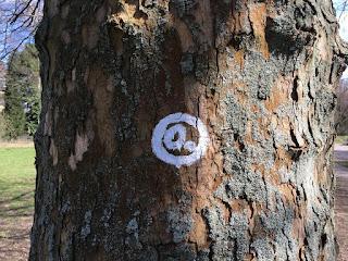 Das schräge O dient als Wegmarkierung - hier auf einem Baum