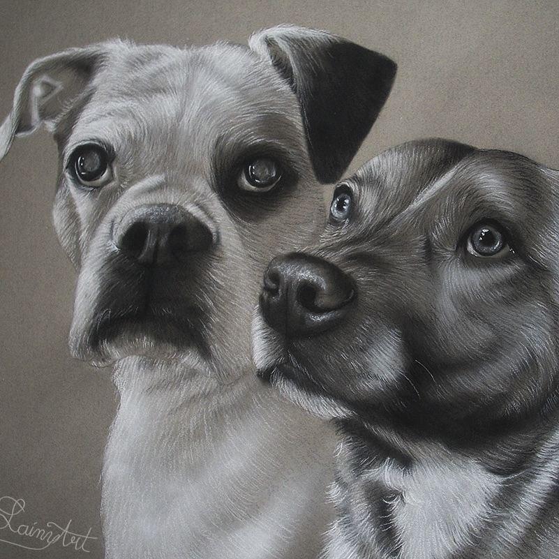 08-Friends-Together-Alaina-Ferguson-Animal-Portraits-Cats-Dogs-and-a-Guinea-Pig