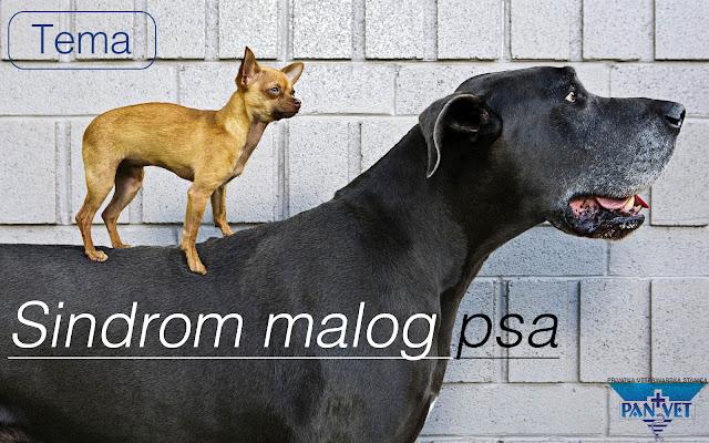 Sindrom malog psa - Panvet Subotica